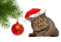 Graue Katze mit Weihnachtsball. Stockbild