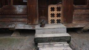 Graue Katze sitzt auf Treppe eines alten hölzernen Dorfhauses stock video
