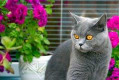 Graue Katze und rosafarbene Blumen Lizenzfreie Stockfotos