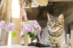 Graue Katze und Vase mit Fliedern Lizenzfreie Stockfotos