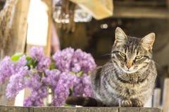 Graue Katze und Vase mit Fliedern Lizenzfreie Stockbilder