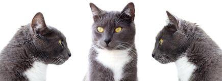 Graue Katzen. lizenzfreies stockfoto