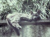 Graue Katzenschauer auf der Leiste Stockfotografie