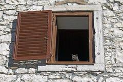 Graue Katzenstellung auf einem Fenster stockbild