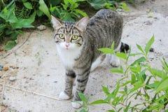Graue kleine Katze Lizenzfreie Stockfotos