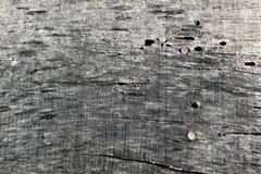 GRAUE NAHAUFNAHME DES HOLZES MIT WURM-LÖCHERN UND NÄGELN lizenzfreies stockfoto