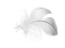 Graue Pelzfeder auf Weiß Stockfotografie