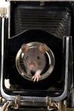 Graue Ratte lizenzfreie stockbilder