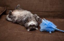 Graue russische Katze zu Hause Lizenzfreies Stockfoto