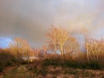 Graue stürmische Wolken über dem Heide Stockbild