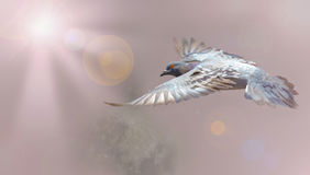 Graue Tauben, die auf Leuchte- und Welthintergrund fliegen Lizenzfreies Stockbild