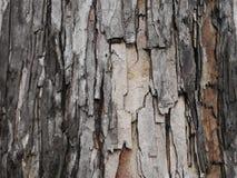 Graue und braune Vertikale der Baumrinde lizenzfreies stockfoto