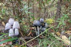 Graue und weiße Pilze im Wald Stockfotografie