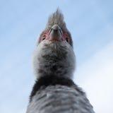 Graue Vögel Kopf, Beschaffenheit, Stockfoto