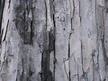 Graue Vertikale der Baumrinde stockfotografie