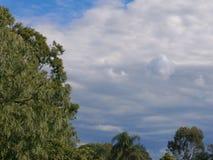 Graue Wolken, blauer Himmel u. gr?ne B?ume stockfoto