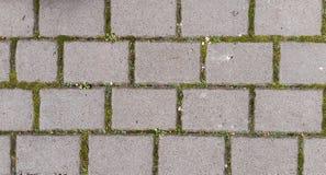 graue Ziegelsteinblöcke mit grünem Gras an den Nähten Stockfotos