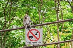 Grauer Affe, der auf dem Geländer mit einem Zeichen sitzt Stockfoto