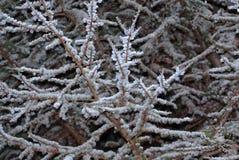 Grauer Baum und Niederlassungen Stockbild