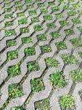 Grauer Beton, der Blöcke und grünes Gras auf Gartenfußweg pflastert Stockbild