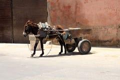 Grauer Esel mit einem Wagen Stockfoto