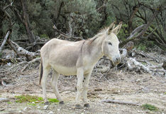 Grauer Esel mit Sattel Lizenzfreie Stockfotos