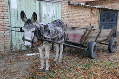 Grauer Esel und leerer Wagen Stockfotografie