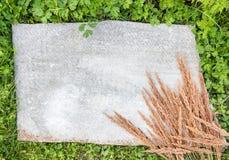 Grauer flacher Asbestrahmen mit wildem Getreidegras auf Grünpflanzen Lizenzfreie Stockbilder