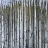 Grauer hölzerner Zaun Struktureller grauer rustikaler Bretterzaun des Hintergrundes Stockbilder