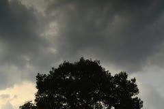 Grauer Himmel- und Schattenbildbaum Lizenzfreies Stockfoto