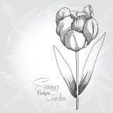 Grauer Hintergrund mit Tulpe lizenzfreie abbildung