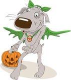 Grauer Hund in Halloween-Kostüm mit Jack o'Lantern Lizenzfreies Stockfoto