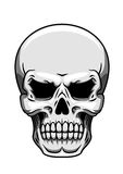 Grauer menschlicher Schädel auf Weiß Stockbilder