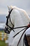 Grauer Ponykopf Lizenzfreie Stockbilder
