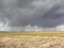 Grauer Regen auf goldenem Feld Stockfotos