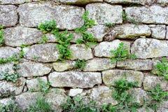 Grauer Steinwandhintergrund mit grünem Gras Lizenzfreies Stockbild