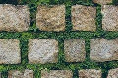Grauer Steinwandhintergrund mit Gras Lizenzfreie Stockfotografie