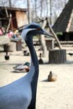 Grauer Vogel lizenzfreies stockbild