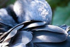 Grauer Vogel, der seine Federn säubert Lizenzfreies Stockbild