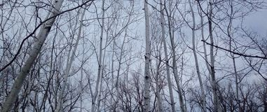 Grauer Wald Stockfoto