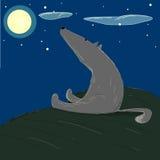 Grauer Wolf eine Nacht, die den sternenklaren Himmel und den runden Mond betrachtet Stockfotografie
