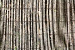 Grauer Zweig, der alte Zaun als Hintergrund Lizenzfreies Stockbild