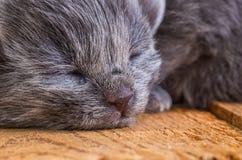 Graues blindes Kätzchen Stockbilder