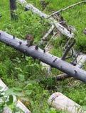 Graues Eichhörnchen auf einem Baum Lizenzfreie Stockfotos