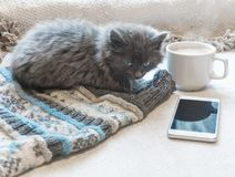 Graues flaumiges Kätzchen, Tasse Kaffee und ein Telefon auf einer weißen Oberfläche stockfotos