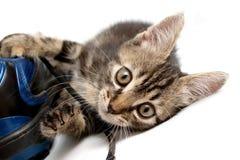 Graues gestreiftes Kätzchen, das mit einem Stiefel spielt Lizenzfreie Stockfotos