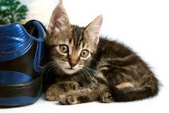 Graues gestreiftes Kätzchen, das mit einem Stiefel spielt Lizenzfreies Stockbild