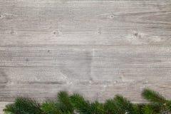 Graues Holz und Niederlassung des Tannenbaums Stockbilder