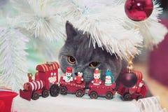 Graues Kätzchen stockfotografie