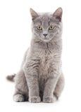 Graues Kätzchen stockfoto